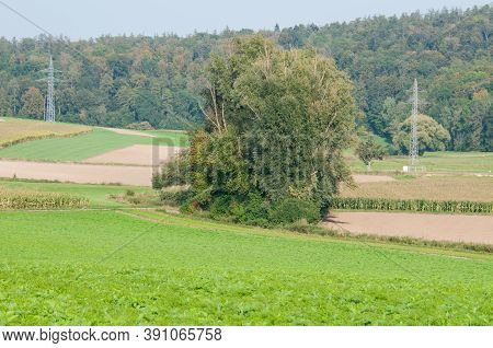 A Rural Landscape With Trees In Agricultural Fields And Electricity Pylons Of An Overhead Power Line