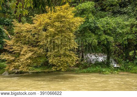 Landscape With Forest, River And Yellow Tree