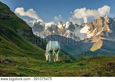 View Of The Highest Caucasus Mountains, White Horse Grazes In Mountain Meadows, White Horse, Panoram