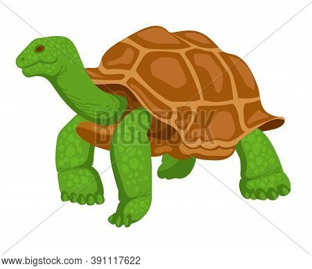 Giant Turtle, Reptile, Wild Animal. Vector Illustration Isolated On White Background. Hand-drawn Tur