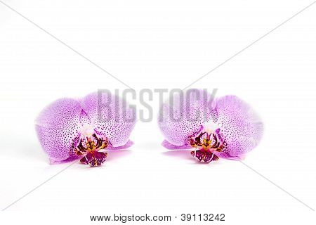 signal bloom on white background