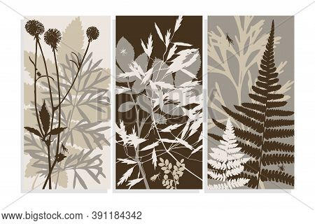 Set Of Abstract Vertical Backgrounds With Botanical Elements. Silhouettes Of Wild Forest Herbs Isola