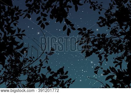 Magic Night Dark Navy Card With Black Tree Branches. Summer Outdoor Starry Sky Vector Wedding Textur