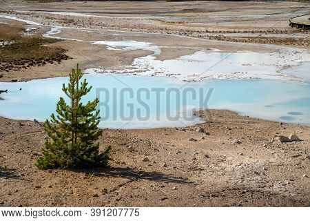 Porcelain Basin Trail, Known For Its Milky Teal Water, In Norris Geyser Basin In Yellowstone Nationa