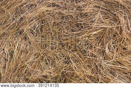 The Texture Of The Straw Collected On The Field.
