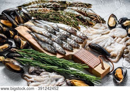 Assorted Set Of Fresh Seafood Tiger Prawns, Shrimps, Blue Mussels, Octopuses, Sardines, Smelt. Gray