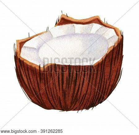 Watercolor Cracked Coconut. Half Of Coconut With Pulp Isolated On White Background. Tropical Fruit I