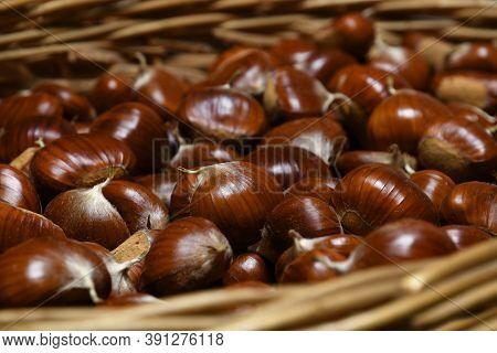 Closeup Of Freshly Picked Chestnuts In Wicker Basket
