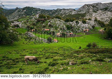Rural Landscape Of Asturias, Spain. Green Meadows And Small Cottages In Picos De Europa National Par