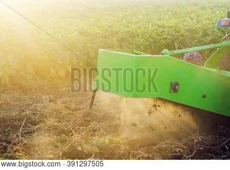 The Process Of Digging Potatoes Out Of The Ground. Using Machines To Improve Food Production. Farmin