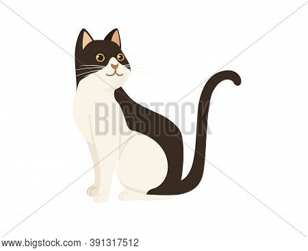 Cute Cartoon Animal Design White And Brown Domestic Cat Adorable Animal Flat Vector Illustration