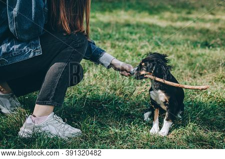 Adorable Puppy And A Girl Playing With Stick On A Green Grass.  Portrait Of A Little Dog.