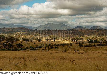 Landscape In Australia With Kangaroos And Wallaby, Tidbinbilla Nature Reserve, Fringe Of Namadgi Nat