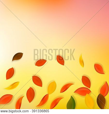 Falling Autumn Leaves. Red, Yellow, Green, Brown Neat Leaves Flying. Gradient Colorful Foliage On Wo