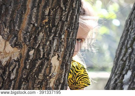 Child  Girl Hid Behind  Tree And Peeks Out  Little, Peeps, Plays Hide And Seek Or  Scared