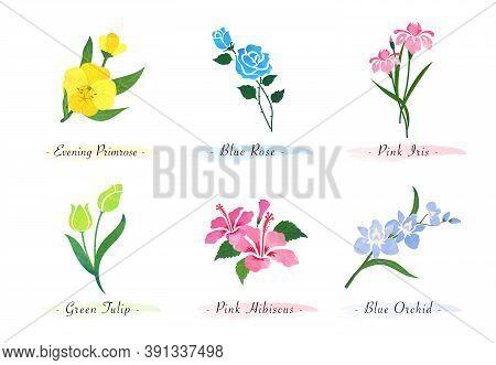 Watercolor Botanic Garden Nature Plant Flower Evening Primrose Rose Iris Tulip Hibiscus Orchid