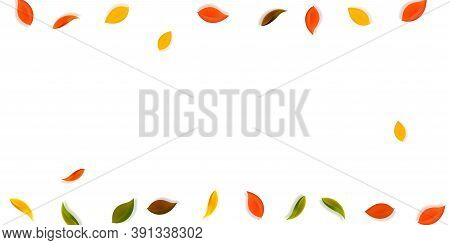 Falling Autumn Leaves. Red, Yellow, Green, Brown Neat Leaves Flying. Border Colorful Foliage On Tren