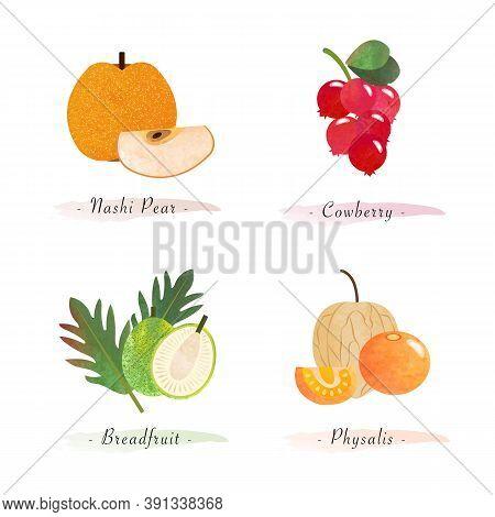 Organic Nature Healthy Food Fruit Nashi Pear Cowberry Breadfruit Physalis