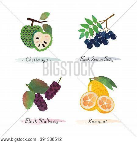 Organic Nature Healthy Food Fruit Cherimoya Black Rowan Berry Black Mulberry Kumquat
