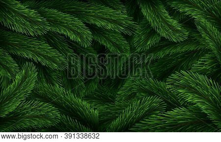 Christmas Tree Pattern. Realistic Fir Branches Green Texture Poster, Xmas Winter Forest Closeup Back