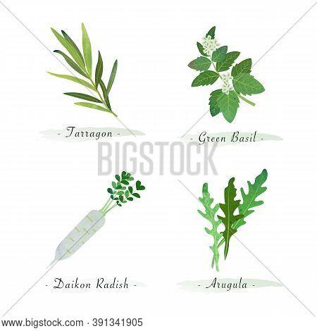 Watercolor Healthy Nature Organic Plant Vegetable Food Ingredient Tarragon Green Basil Daikon Radish