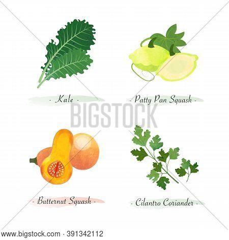 Watercolor Healthy Nature Organic Plant Vegetable Food Ingredient Kale Patty Pan Squash Butternut Sq
