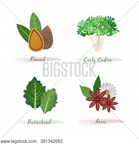 Watercolor Healthy Nature Organic Plant Vegetable Food Ingredient Almond Curly Endive Butterhead Ani