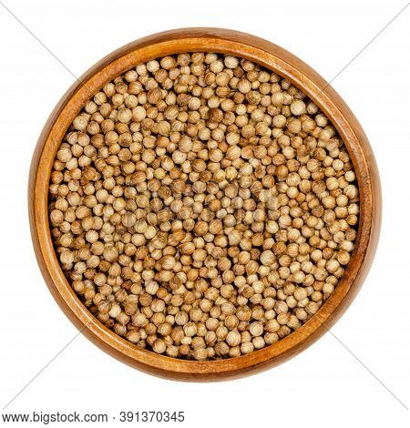 Coriander Seeds In A Wooden Bowl. Whole Dried Coriander Fruits, Used As A Spice. Coriandrum Sativum,