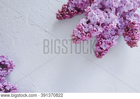 A Lot Of Lush Lilacs On A Concrete Gray Background. Top View Of Blooming Branches, Flower Border. Th