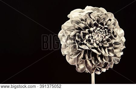 Stylish Bouquet. Botany Concept. Beautiful Silver Flowers. Floral Shop. Metallic Steel Or Golden Col