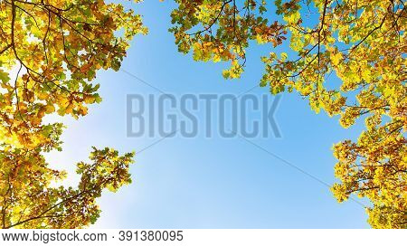 Blue Sky Framed By Oak Branches With Autumn Yellow Leaves. Autumn Background With Clear Sky And Oak