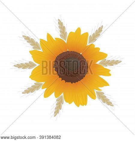 Sunflower And Spikelets Of Wheat. Autumn-summer Plant Composition. Hand-drawn Vector Illustration. S