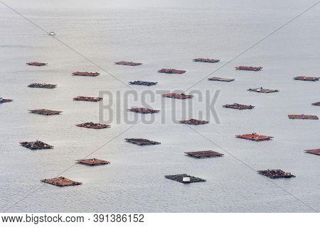 Farms Of Mussels (bateas) In The Ria De Vigo Estuary.