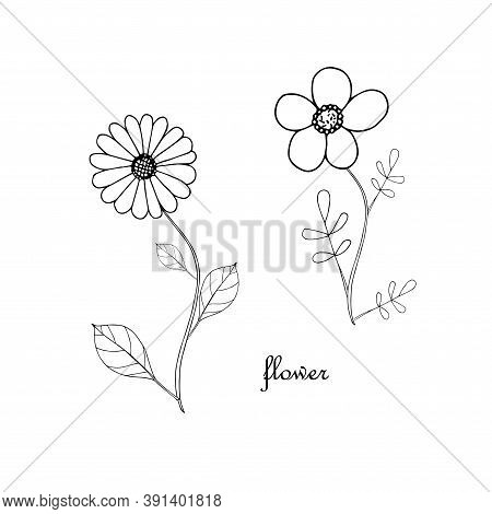 Flower With Leaves Ink Monochrome Hand Drawn Sketch. Art Nature Design Element Stock Vector Illustra