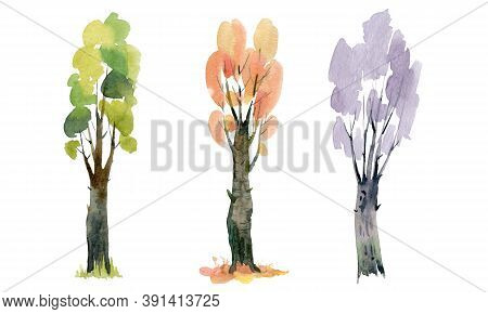 Three Beautiful Trees From Different Seasons. Watercolor