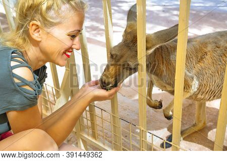Blonde Tourist Woman Feeding Kangaroo In Australia. Interacting With Cute Kangaroo Orphan. Australia