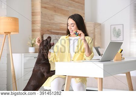 Young Woman Getting Distracted By Her Dog While Working With Laptop In Home Office