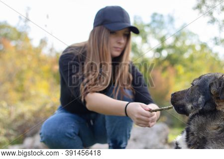 Woman Playing A Game Of Fetch With A Dog On A Sunny Autumn Day, Dog Holding On The Stick Strongly An