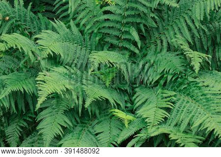 Fern Leaves And Branches In The Summer Garden.