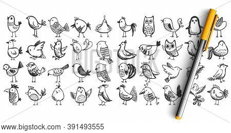 Birds Doodle Set. Collection Pencil Pen Ink Hand Drawn Sketches Templates Patterns Of Flying Animals