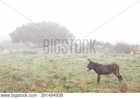 Windswept Trees In The Fog With A Brown Donkey In Sardinia, Italy
