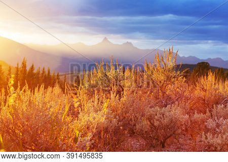 Colorful  autumn meadow in mountains. Natural background.