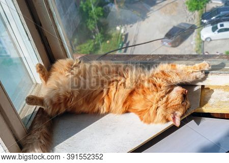 A Tabby Ginger Cat Is Relaxing On The Window Sill With Blurred Street Background