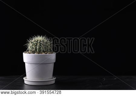 Cactus Plant In White Ceramic Potted On Retro Dark Wooden Desk On Black Wall With Minimal Style. Hom