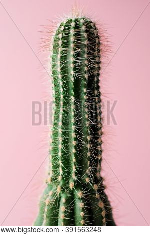 Little cactus plant against pink wall.