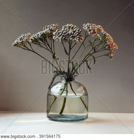Achillea Millefolium, Commonly Known As Yarrow Or Common Yarrow In The Glass Vintage Vase Against Da