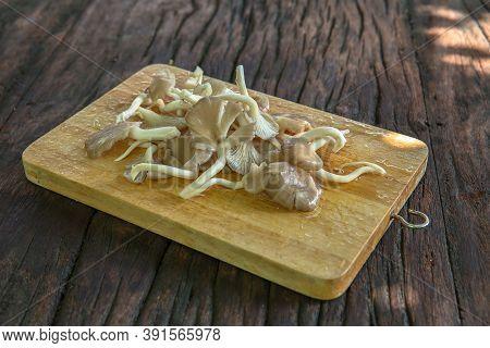King Trumpet Mushroom On A Background Of Wood Texture. Useful Edible Mushrooms
