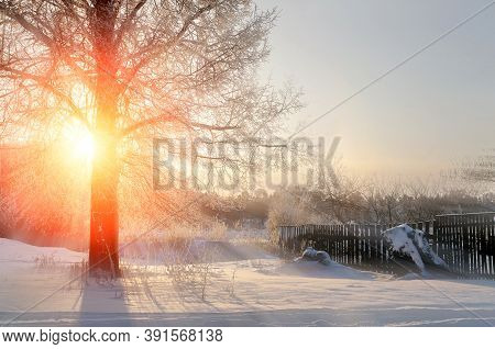 Winter sunset landscape with the frosty winter trees and sunlight winter beams -winter landscape scene, rural winter landscape, winter sunrise view. Sunny winter morning, winter landscape