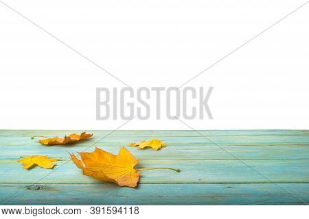 Maple Leaves On Wooden Turqoise Table On A White Background