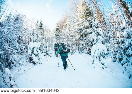 Friends In The Winter Trekking In The Mountains. Travelers Go On A Snowy Forest Trail. Three Friends